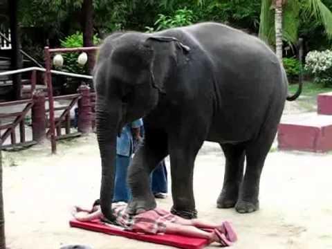 Excellent! Wonderful Thai Massage video