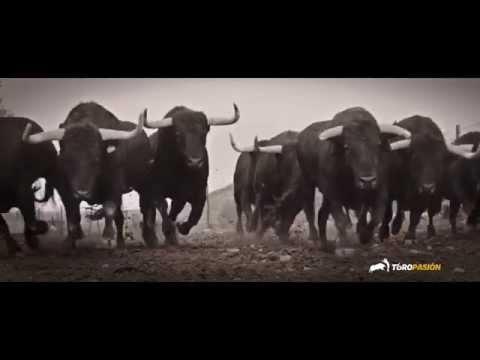 Toropasión - Amor por el toro bravo (Feliz Navidad 2014/15)