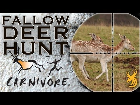 Hunting Fallow Deer for the Table