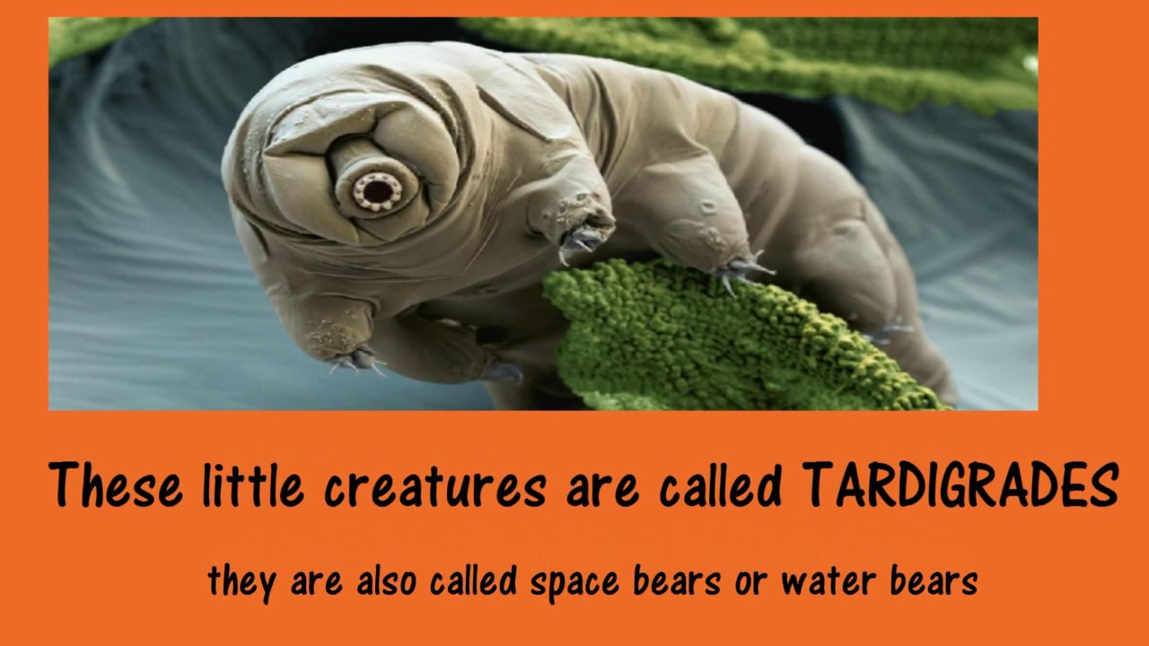 LEARNING ABOUT THE MYSTERIOUS WATER BEARS OR SPACE