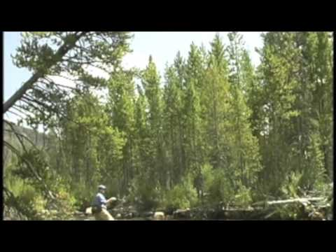 Utah fly fishing high country: Falcon's Ledge
