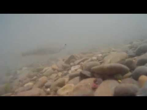 Рыбьята в Новопятигорском озере