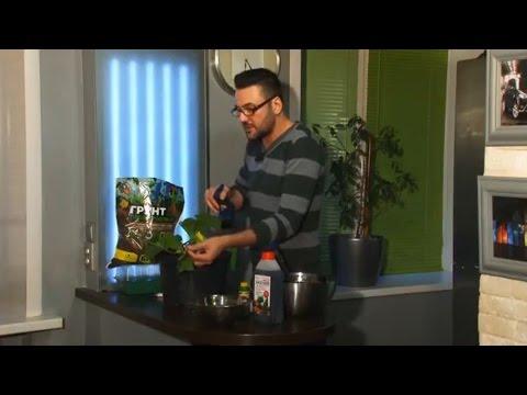 Выращивание огурцов в домашних условиях – посев и емкости, сорта и уход