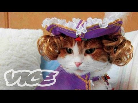 Cats In Funny Outfits