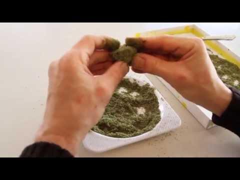 Come fare l'Hashish – Metodo basato sull'estrazione dell'olio di marijuana