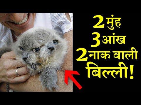 दुनिया की इस अनोखी बिल्ली को देखकर हैरान रह जाएंगे ? INDIA NEWS VIRAL