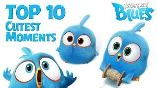 Download Song Angry Birds Blues  - Top 10 Cutest Moment Free StafaMp3