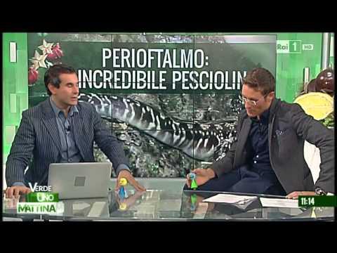 Valerio Rossi Albertini – Tg della scienza