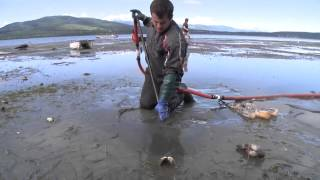 ▶ Ốc vòi voi trên bờ biển Discovery Bay