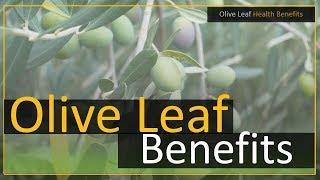 Olive Leaves Health Benefits