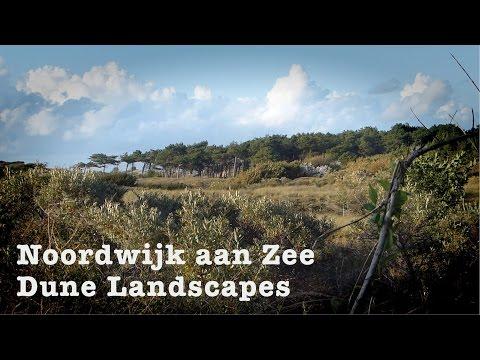 Dune Landscapes Noordwijk aan Zee Netherlands