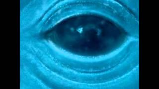Blue Whale - Frank Ocean ~LYRICS~ *NO ADS*