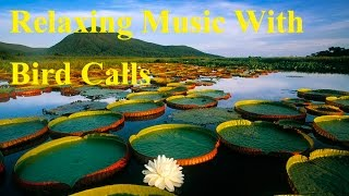 40 Minute Relaxing Music With Smooth Music Bird Calls