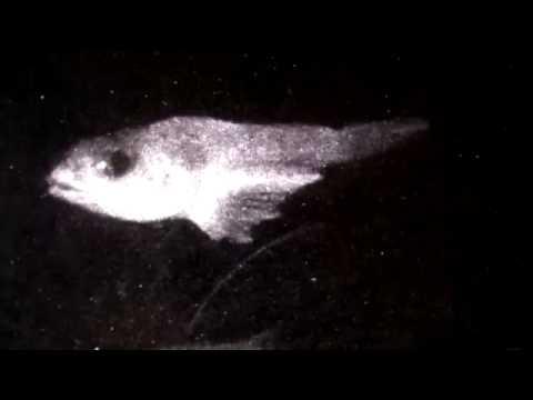 Installing a Deep-Sea Webcam