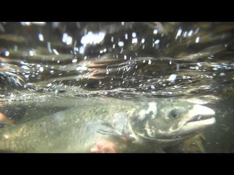 Санина рыба под водой
