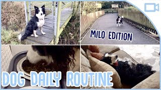 Daily Routine for Dogs!