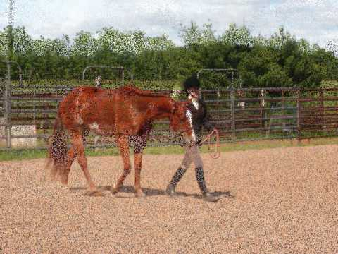 RB Just Plain Irish APHA HUS Gelding Video