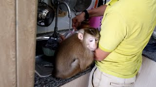 Monkey Baby Nui | Nui waited for Dad to make milk