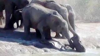 Atemberaubend !  Elefantenfamilie rettet Baby