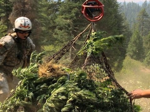 Weed Country: Pot Grower Mike Boutin on Discovery Channel's Newest Reality Show