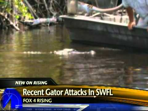An alligator attacked a teen swimming in the Caloosahatchee River near Moore ...