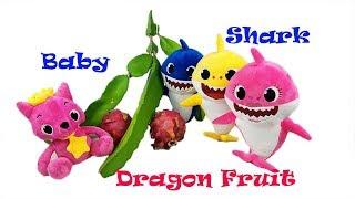 Baby Shark Family, Pinkfong Taste Test Dragon Fruit Challenge