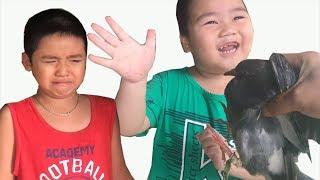 Trò chơi bắt chim bồ câu Bé Chuột cười - Bé Dương khóc❤Kênh Em Bé