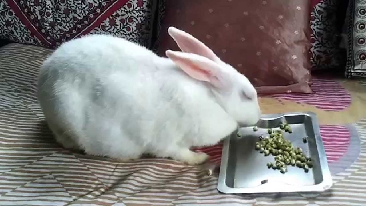 Images of Cute White Rabbits Cute White Rabbit Eating