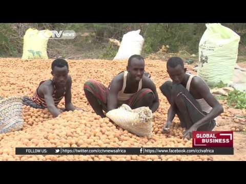 Somalia lemon farmers strive to secure Middle East market