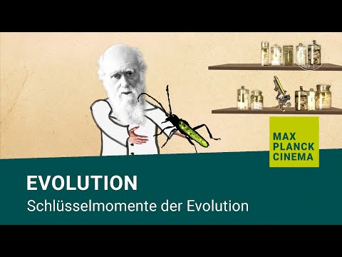 Evolution - Schlüsselmomente Der Evolution