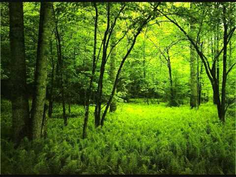 Morning in the forest - over one hour of relaxing forest sounds