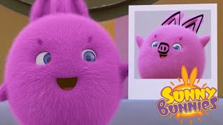 Sunny Bunnies | Imagem perfeita | Desenhos animados | WildBrain em Português