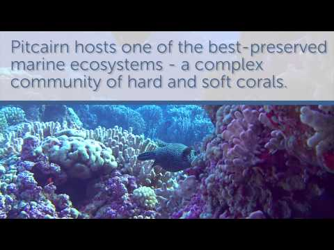 World's Biggest Marine Reserve: Pitcairn Facts and Footage
