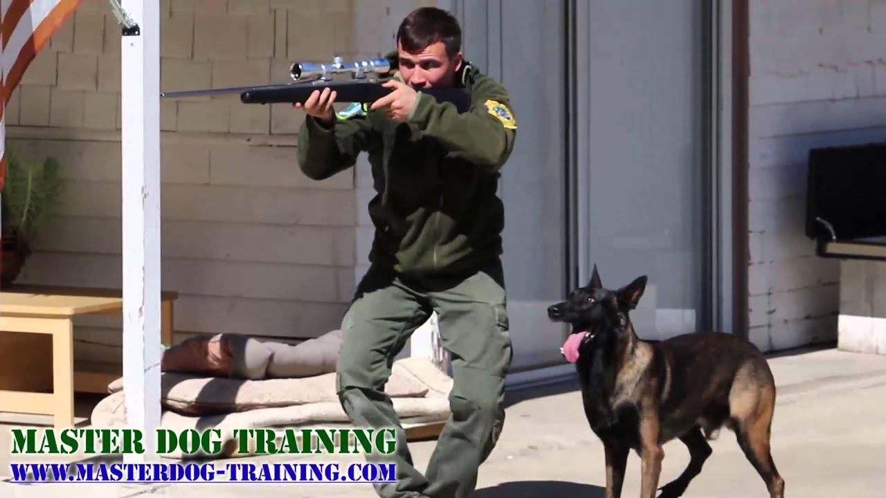 K Dog Bite Training