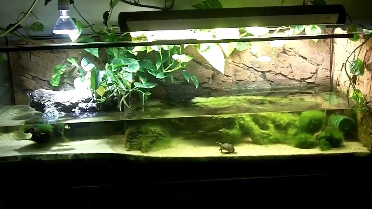 Mini Turtle Aquarium : ?belst Random I iDerFriseur Wasserschildkr?ten Aquarium - YouTube