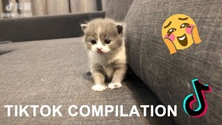 CUT CATS & DOGS Tik Tok funny video Compilation 2019 #6