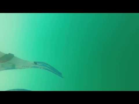 Whale sounds in Costa Rica