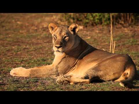 Robin Pope Safaris | Luangwa River Camp | Safari Zambia | South Luangwa
