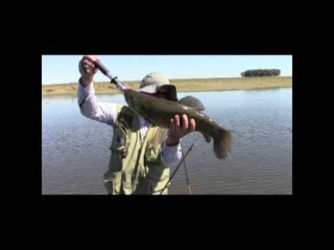 Pesca de Tarariras con Artificiales 08 09 13