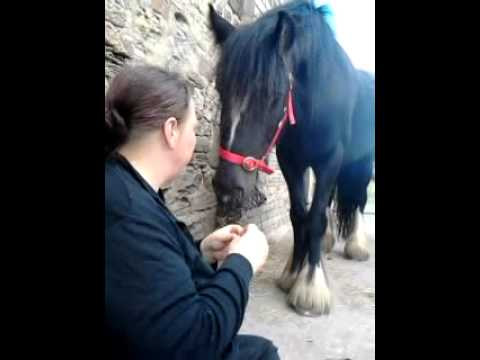 horse kissing for mint sweets xxx