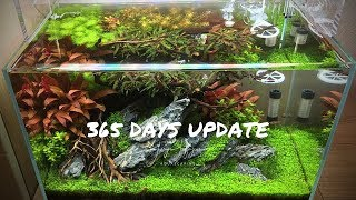 ADA 45p Aquascaping surprise for a customer after 365 days