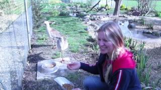 Kara Sun with Seriemas at Kim Willem`s farm