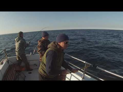 рыбалка на баренцевом море териберка видео