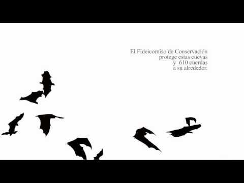 ANUNCIO /  LA IMPORTANCIA DE LOS MURCIELAGOS