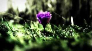 Watch Enya Sumiregusa video
