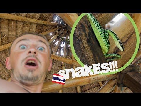 Paradies der Schlangen | Koh Phangan | Thailand | www.WELTREISE.tv #192