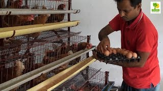 Home Business Ideas - Layer Chicken Farming Plan and Starting a Business at Poultry Farming
