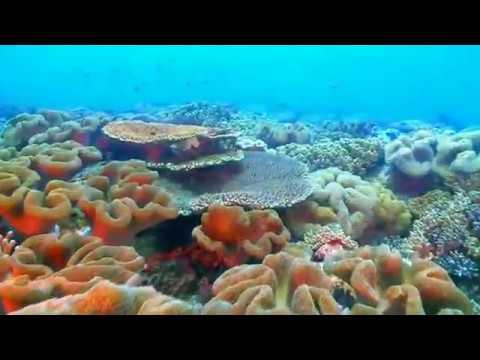 南海指環 東沙環礁國家公園的保育與復育
