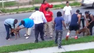 Crazy Dog Fight in Spring Valley NY