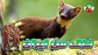 مستند فارسی - قاتلین بالفطره - جنگل های استوایی